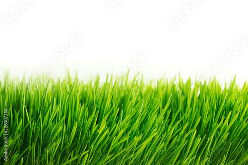Photo sur Toile Herbe Fresh green grass