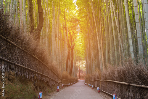 Foto op Plexiglas Bamboe Bamboo forest with walking way, Arashiyama Kyoto Japan