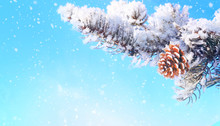 Beautiful Fluffy Fir Branch And Cone Covered With Snow In Winter On Christmas On Nature In Forest Against Blue Sky Close-up In Snowfall With Copy Space.