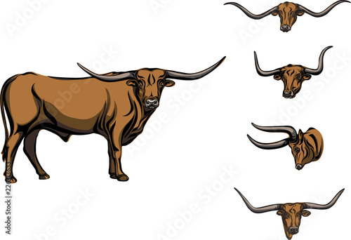 Vászonkép buffalo, bull, head, horns, vector, picture, longhorn, color