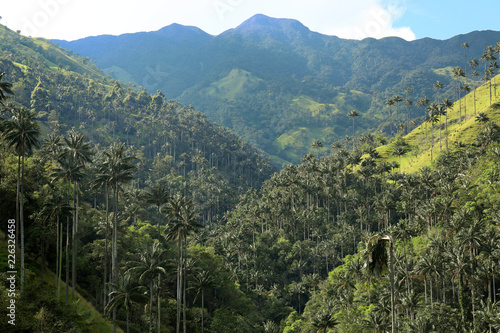 In de dag Khaki Cocora valley an enchanting landscape towered over by the famous giant wax palms. Salento, Colombia