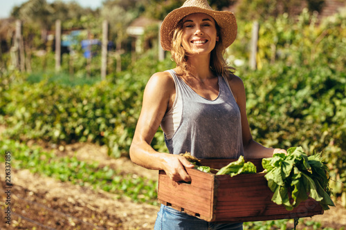 Fototapeta Woman harvesting fresh vegetables from her farm