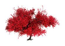 3D Rendering Momiji Tree On White