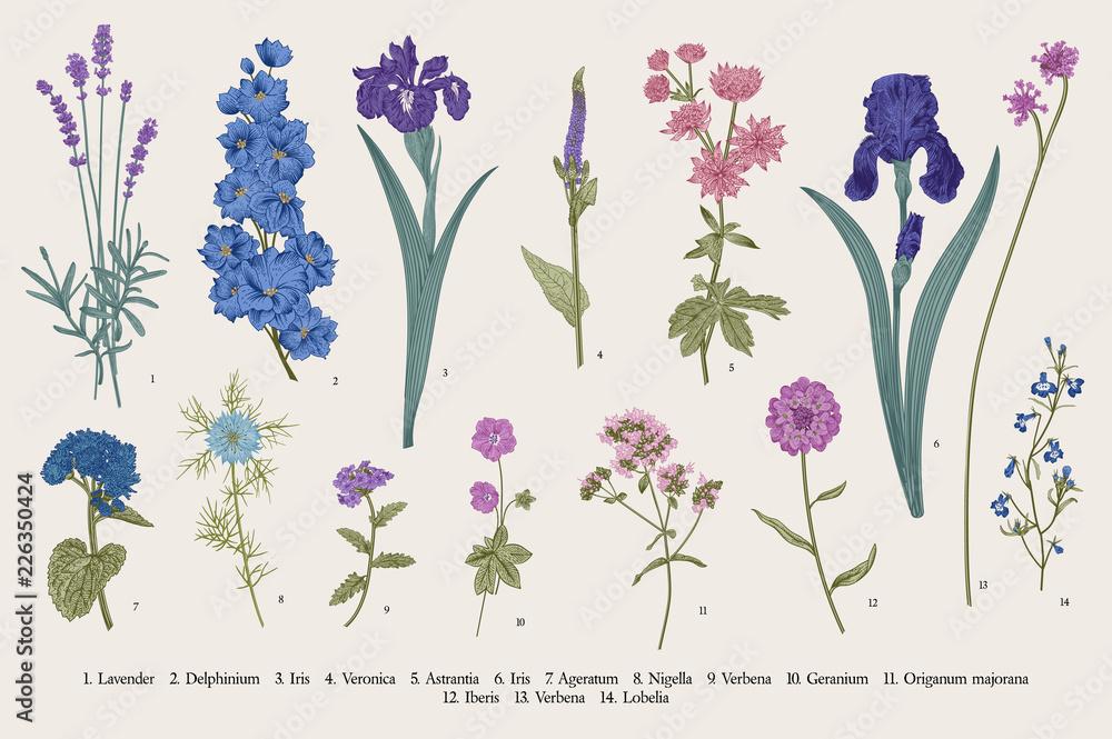 Fototapeta Summertime. Garden flowers. Vector vintage botanical illustration.