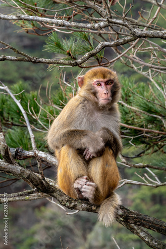Foto op Plexiglas Aap A adult monkey is sitting on a bough