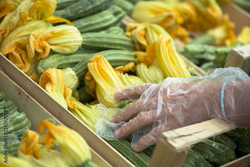 Female hand wearing disposable plastic gloves picking fresh zucchini with flowers