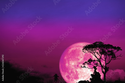 full Beaver moon back over silhouette tree in field on night sky