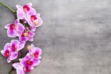 Fototapeta Storczyk - Beauty orchid on a gray background. Spa scene.