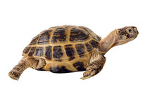 Overland Digging Turtle