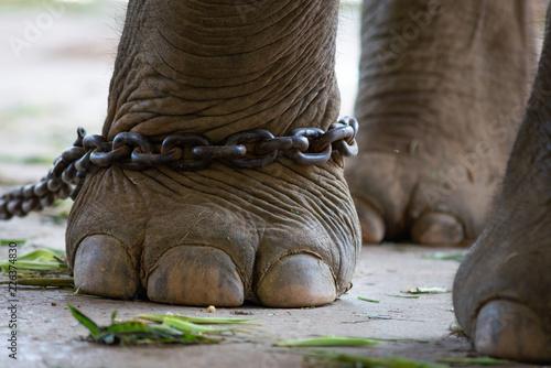 elephant bondage Canvas Print