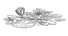 Water Lily Illustration, Drawing, Engraving, Ink, Line Art, Vector
