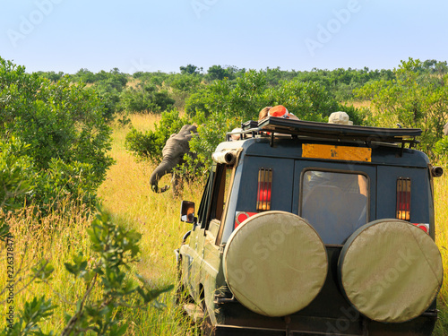 safari jeep facing an elephant behind a bush in a game drive