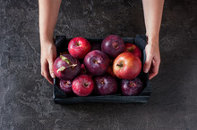 Woman Holding The Wooden Box With Fresh Ripe Apples