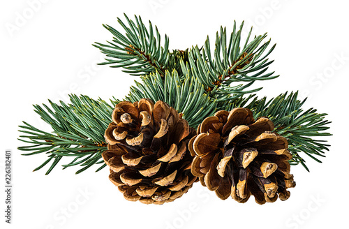 Obraz Brown pine cone on white background with clipping pass - fototapety do salonu