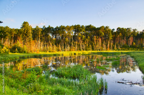 A lake in Prince Albert National Park in the early morning hours. Wallpaper Mural