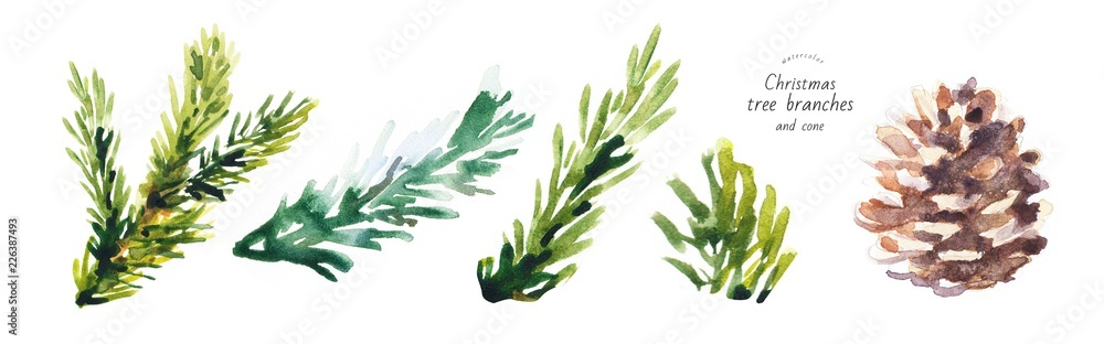 Fototapety, obrazy: watercolor isolated illustration of christmas tree branches, freehand drawing of festive needles from spruce painted with paints, decoration for christmas and new year