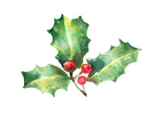 Watercolor Isolated Illustration Of Holly, Drawing By Hand Branches Of Berries With Paints, Decoration For New Year And Christmas