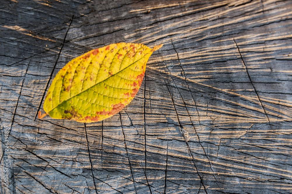 Fototapeta Żółty jesienny liść na drewnianym tle
