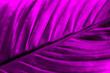 canvas print picture - texture purple big leaf close up