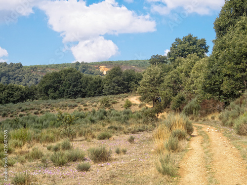 Foto op Canvas Australië Blooming wildflowers in autumn along the Camino track - Foncebadon, Castile and Leon, Spain