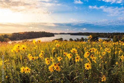 Fototapeta Field of flowers by the lake obraz