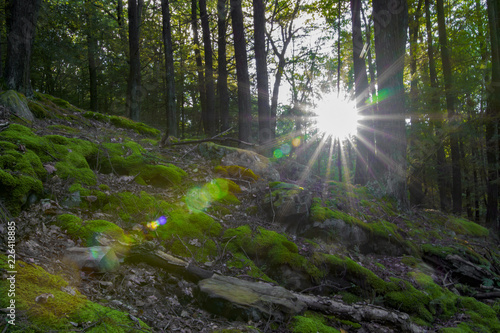 Wall Murals Forest Sun Flare Through Trees, Mossy Woodland Landscape
