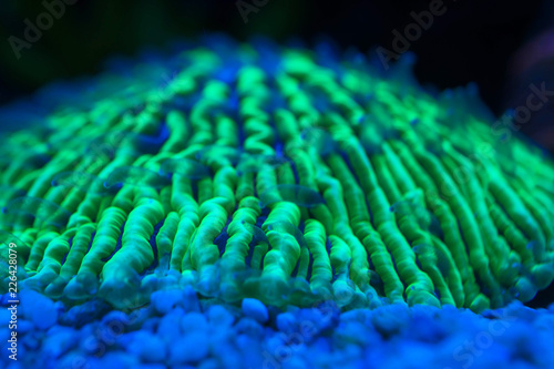 Photo  blur blue and neon green fluorescent corals at night background