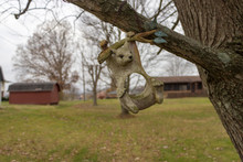 Squirrel Bird Feeder Hanging From Tree