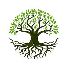 Tree Root Design Illustration