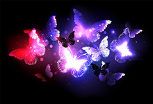 Swarm Of Night Butterflies
