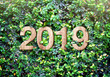 Leinwanddruck Bild - 2019 happy new year wood texture number on Green leaves wall background,Nature eco concept,organic greeting card holiday.leave copy space for adding text.