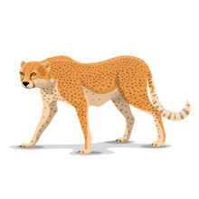 Cartoon Cheetah Wild Animal, Vector