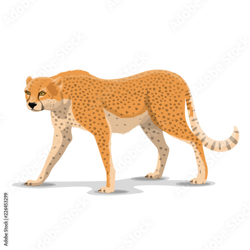 Cartoon cheetah wild animal, vector Tapéta, Fotótapéta