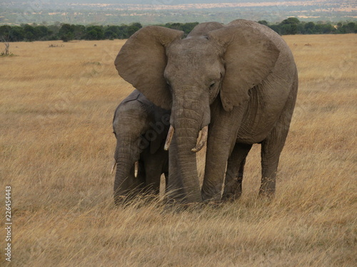 Foto op Aluminium Olifant Elephant and calf
