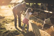 Feeding Animals On The Farm.