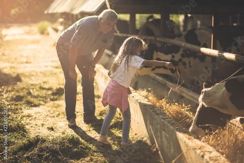 Foto  Feeding animals on the farm.