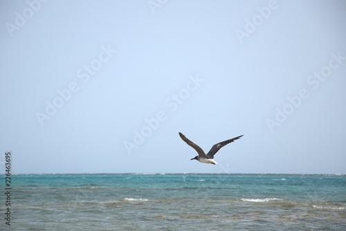 Fotografia  Ptaki i mewy nad woda i wybrzezu