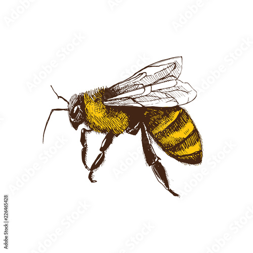 Hand drawn honeybee in sketch style  isolated on white background Fototapet