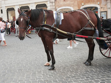 Horse And Typical Carriage That Transports Tourists To Rome
