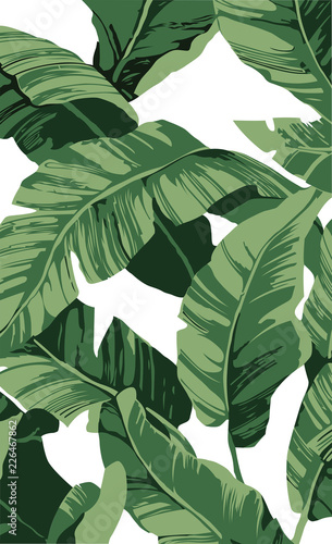 Obraz Pattern banana tree and leaves that it is a tropical plant on white background, flat line vector and illustration. - fototapety do salonu
