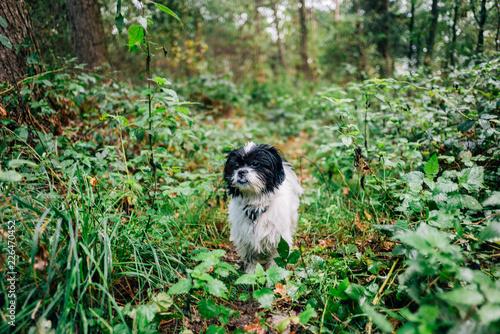 Herbstspaziergang mit Hund im Wald Wallpaper Mural