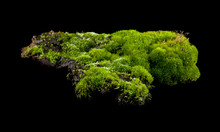 Green Moss Isolated On A Black...