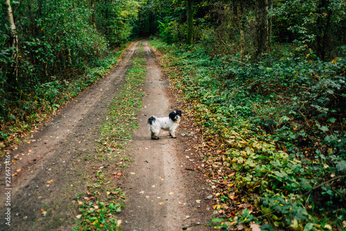 Fotografie, Obraz Herbstspaziergang mit Hund im Wald