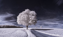 Infrared Photography - Ir Phot...
