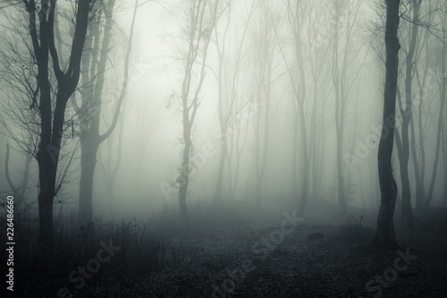 Wall Murals Forest dark mysterious forest with trees in fog