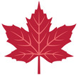 Red maple leaf vector illustration