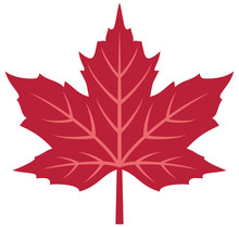 Red Maple Leaf Vector Illustra...