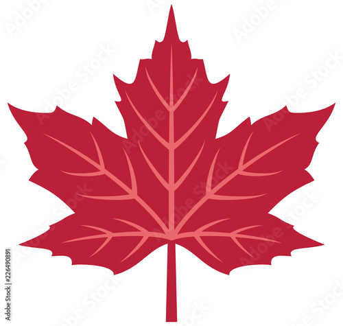 Fototapeta Red maple leaf vector illustration