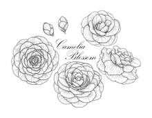 Camelia Blossom Set2