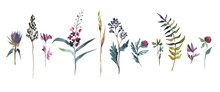 Watercolor Illustration. Collection Of Field Flowers. Herbs Watercolor Set.